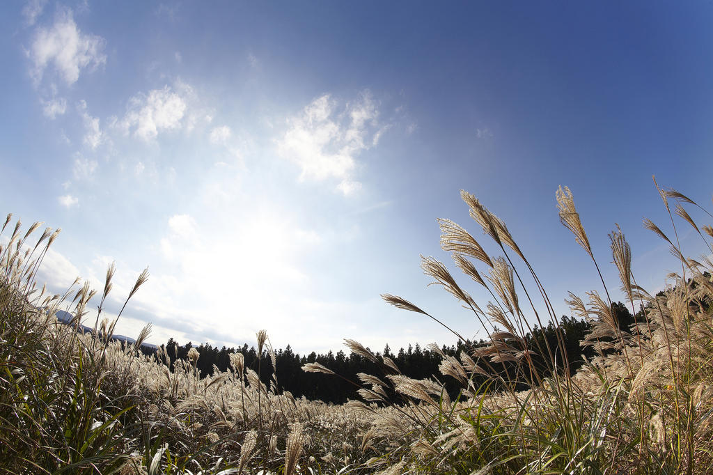 Photo Illustration Samyang 12mm F2.8 Fisheye Sony E
